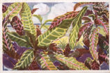 [Florida: Art Project] Collection of Key West postcards [graphic] : views by WPA artists [Stanley...