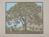 Prints, postcards and posters - - Cottonwood on State Capitol grounds