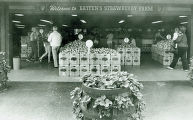 Photographs - - 1983 - - Batten's Strawberry Farm store.