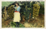 Postcards - - 1920s - - A Florida peach in a banana grove.